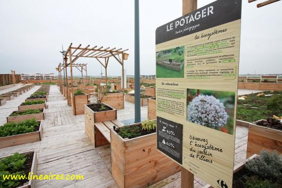 Carrefour s'essaie à l'agriculture urbaine